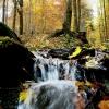 Ochranu lesů hejtmanství podpoří sedmi miliony
