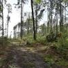 Hejtmanství vydalo zákaz vstupu do některých částí lesů v kraji
