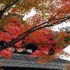 FOTO: Barevný podzim v Japonsku