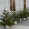 Do dětských zařízení včetně šumperského putují stromky zdarma