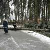 Hasiči v kraji odstraňovali popadané stromy a uvolněné střešní krytiny