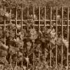 Ovoce za plotem bylo důvodem k vraždě