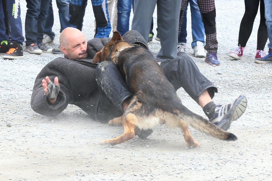 IZS v akci foto: sumpersko.net