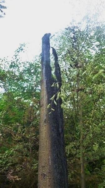 Krchleby - po úderu blesku začal hořet let foto: HZS Ok
