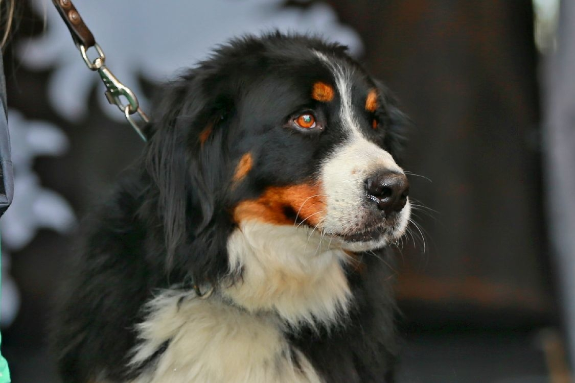 vítěz psí sympatie Max foto: sumpersko.net