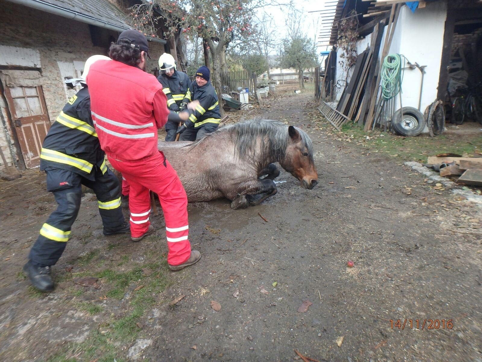 Chudobín - záchrana koně zdroj foto: HZS Olk.
