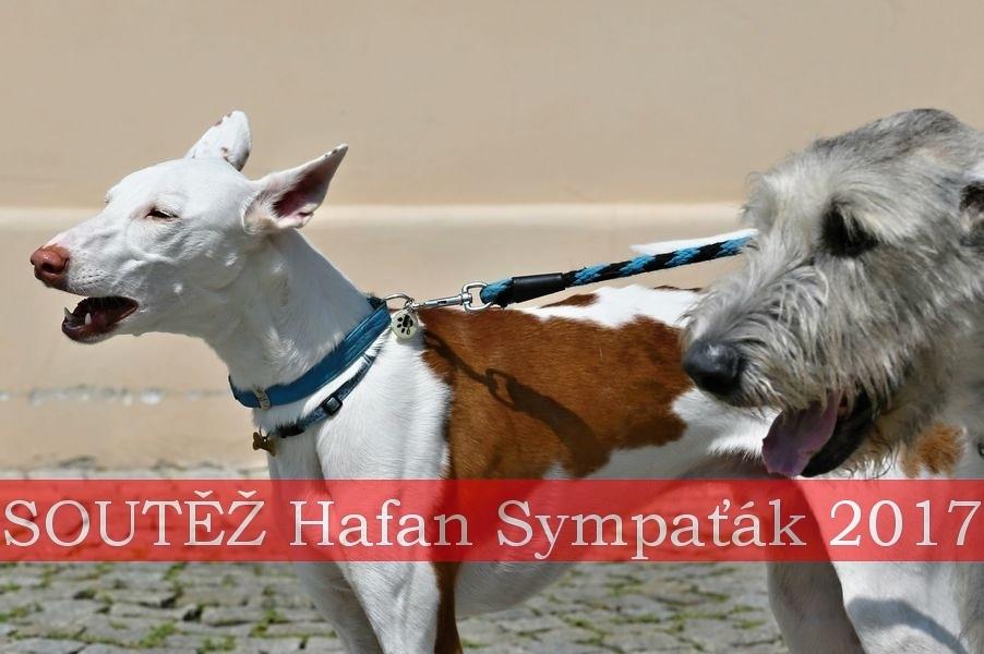 Šumperský hafan 2017 - soutěž psí sympatie zdroj:šumpersko.net