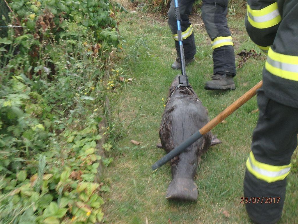 Pňovice - netradiční zásah hasičů zdroj foto: HZS Olk