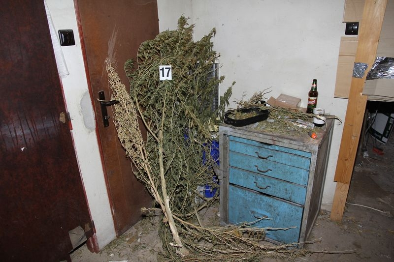 Mohelnicko - pěstírna zdroj foto: PČR