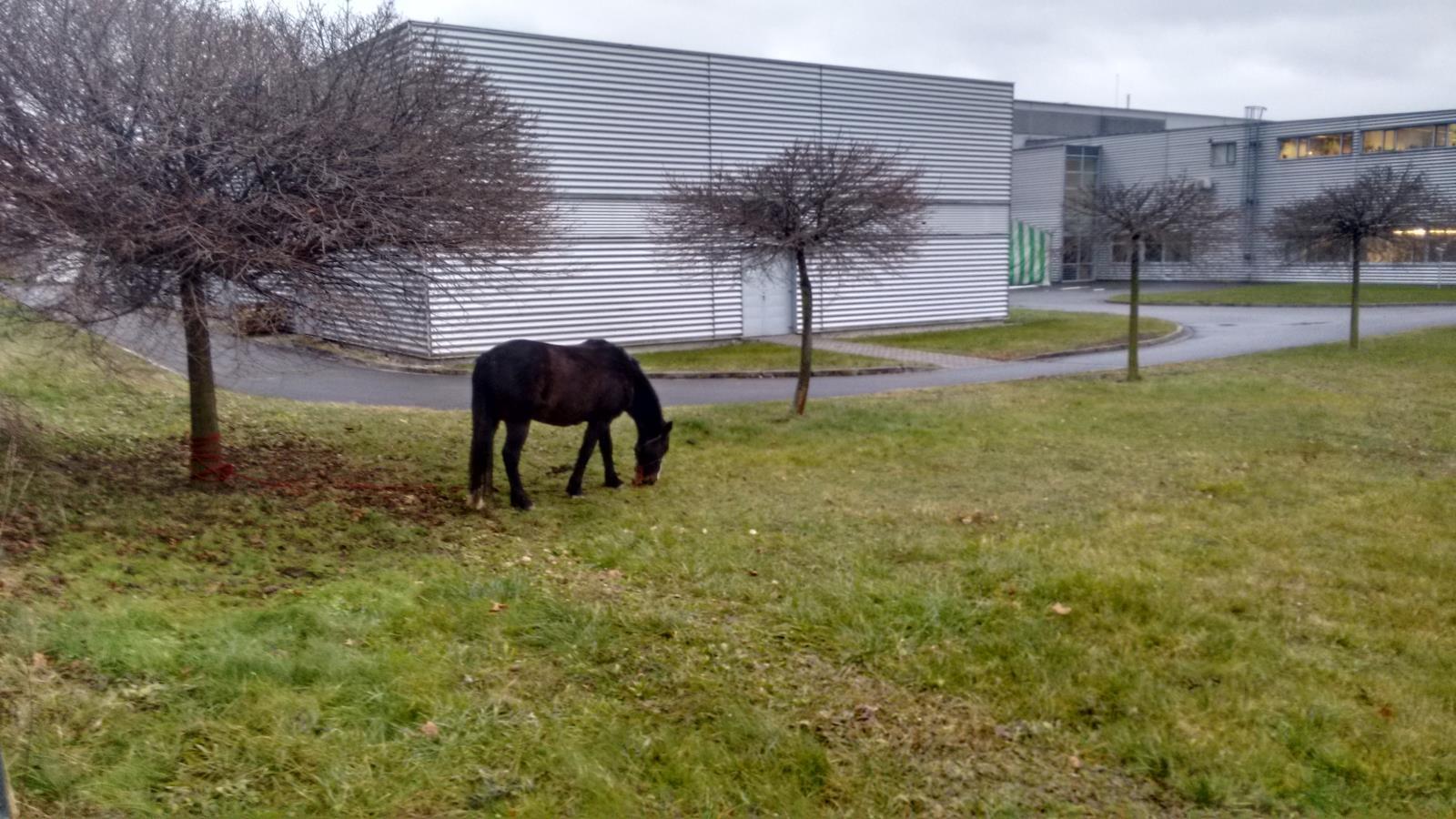 kůň v Šumperku tdroj foto: HZS Olk