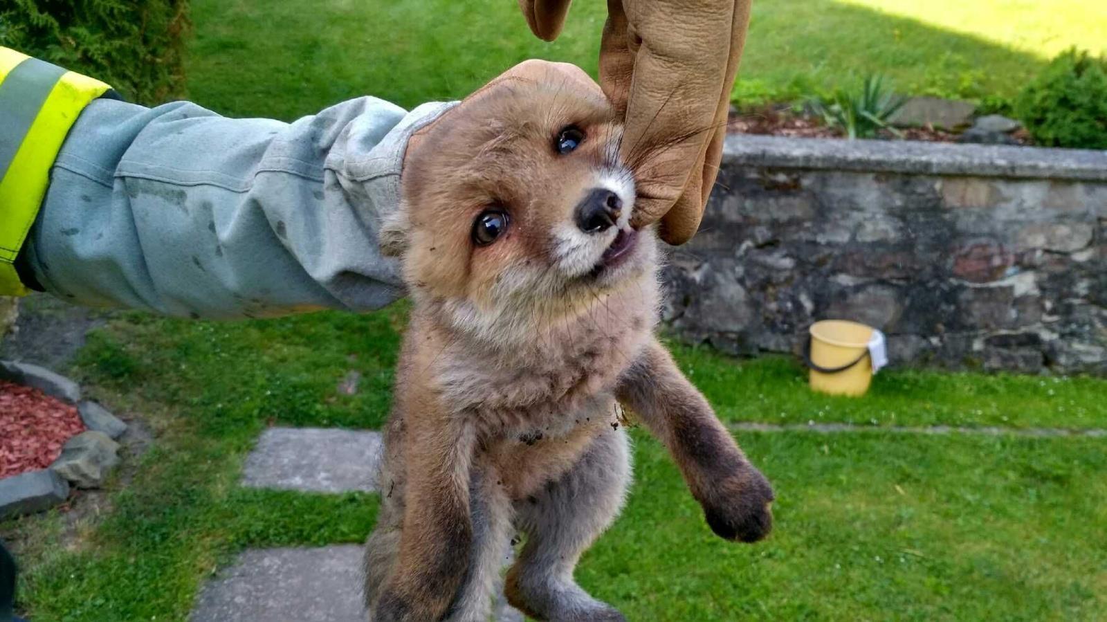 liška v jámě zdroj foto: HZS Olk