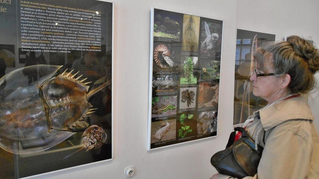 Zkameněliny severní Moravy
