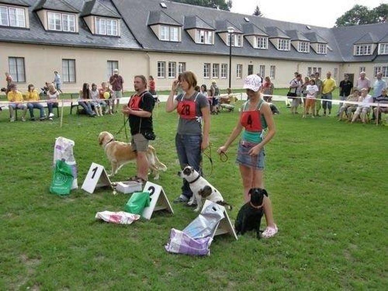 Šumperský Hafan se od roku 2008 pořádá v Pavlínině dvoře