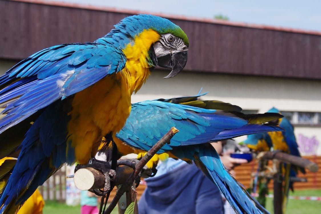 papouščí den na Krásném 2013