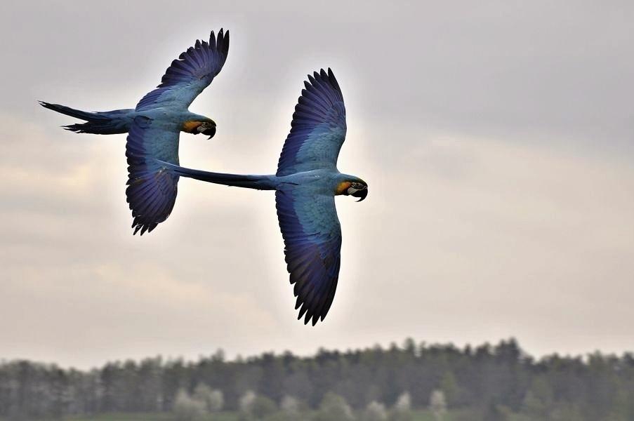 papouščí den na Krásném zdroj foto:V.Krejčí