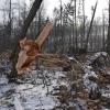 Kalamita v lesích si vyžádá zákaz vstupu