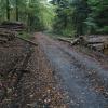 Zloděj na Šumpersku ukradl vytěžené smrkové dřevo