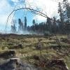 Polští hasiči pomáhají na Jesenicku hasit mýtinu