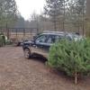 Lesníci rozváží vánoční stromky dětem