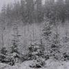 Lesníci posílili hlídky v lesích