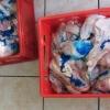 Státní veterinární správa na Moravě odhalila zásilky problematického masa