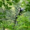 V parku ve Zbrašovských aragonitových jeskyních jsou tisíce kusů nové zeleně