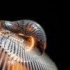 Při aukcích energií dochází ke klamání spotřebitelů