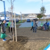 Výsadba stromů v Šumperku