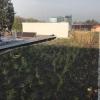 Na mohelnické ZŠ Mlýnská slavnostně otevřeli zelenou střechu