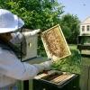 Hejtmanství rozdělí rovný milión včelařům