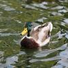 V České republice je letos druhé ohnisko ptačí chřipky