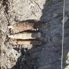 Nález munice v Rapotíně