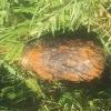 Při výkopových pracích v Postřelmově našli ruční granát