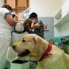 Zubní víla ve FN Olomouc má čtyřnohého pomocníka