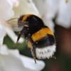 Letošní zima byla pro včelaře přívětivější