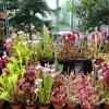Stovky masožravých rostlin na jednom místě