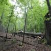 Jizerskohorské bučiny jsou zapsány na seznamu UNESCO